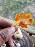 Front Yard Fungus image libre de droits