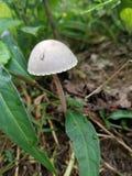 Front Yard Fungus royalty-vrije stock afbeelding