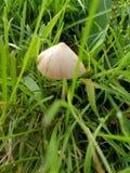 Front Yard Fungus foto de archivo libre de regalías