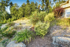 Front yard hill with dry grass ans bushes Royalty Free Stock Photos