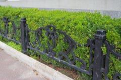 Front Yard Landscape Design med buxbomhäckar Buxbomhäck med det lilla metallstaketet Bosatt staket Arkivfoton