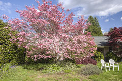 Front yard Spring bloom Oregon state. Stock Photos