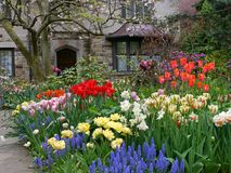 Front yard with spring flowers. Tulips, hyacinths and daffodils Royalty Free Stock Photography