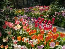 Front yard with tulips Stock Photography