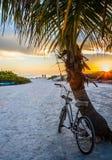 Bike and palm tree at Crescent Beach. View of bike, palm tree and white sand at the sunset - Crescent Beach, Siesta Key, FLorida Stock Photo