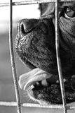 Frontal face. Close view of the front part of the head of a dog behind a fence Stock Images