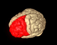 Frontal Lobe. Part of the human brain highlighted red Royalty Free Stock Image
