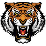Fronte arrabbiato della tigre illustrazione di stock