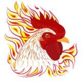 Fronte bianco della testa del fuoco del gallo Fotografie Stock Libere da Diritti