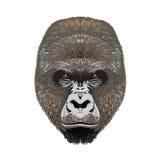 Fronte capo angy delle gorille Fotografia Stock