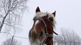 Fronte dei cavalli stock footage