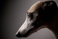 Fronte del cane Fotografia Stock Libera da Diritti