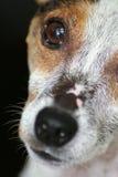 Fronte del cane Fotografie Stock Libere da Diritti