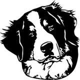 Fronte del cane di montagna di Bernese Immagini Stock