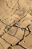 Fronte del deserto Immagini Stock Libere da Diritti