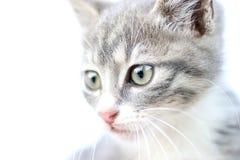 Fronte del gattino Fotografie Stock