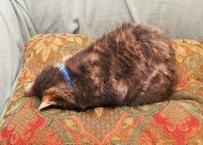 Fronte del gatto giù su un cuscino fotografia stock