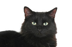 Fronte del gatto nero Immagine Stock
