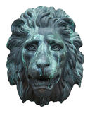 Fronte del leone Immagini Stock