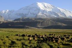 Fronte del nord del Mustagh Ata. La Cina Immagini Stock Libere da Diritti