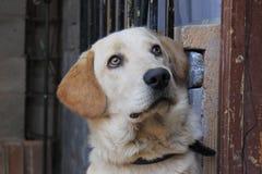 Fronte dell'animale domestico Fotografie Stock Libere da Diritti