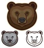 Fronte dell'orso bruno Immagine Stock Libera da Diritti