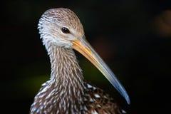 Fronte dell'uccello Immagini Stock