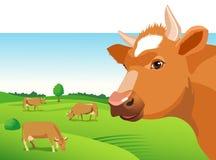 Fronte della mucca su un fondo verde del campo Fotografie Stock Libere da Diritti