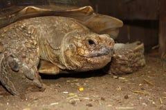 Fronte della tartaruga Fotografia Stock
