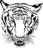 Fronte della tigre in bianco e nero con l'occhio giallo. Fotografia Stock