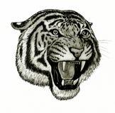 Fronte della tigre che rugge Immagini Stock