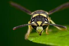 Fronte della vespa Fotografie Stock