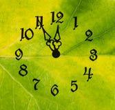 Fronte di orologio su un foglio verde Fotografie Stock