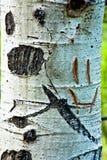 Fronte di smiley sull'albero dell'Aspen Fotografie Stock