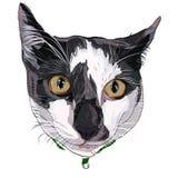 Fronte disegnato a mano del gattino Fotografia Stock