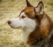 Fronte giallo della sabbia del paesaggio e del cane degli alberi Fotografie Stock Libere da Diritti