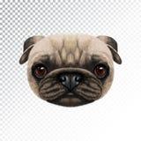 Fronte illustrato vettore del cane del carlino Fotografia Stock Libera da Diritti