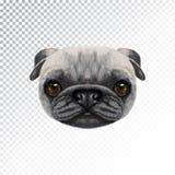 Fronte illustrato vettore del cane del carlino Immagini Stock