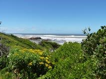 Fronte mare in Hermanus, Sudafrica fotografia stock libera da diritti