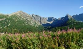 Fronte in montagne Immagine Stock Libera da Diritti