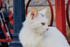 Fronte sveglio del gatto, nuova foto 2018 fotografia stock libera da diritti
