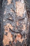 Fronte in un albero Fotografia Stock