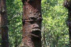 Fronte in un vecchio albero Fotografie Stock Libere da Diritti