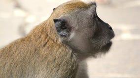 Fronte vuoto della scimmia a Singapore fotografia stock