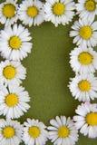 Frontera 1 de la flor Fotografía de archivo libre de regalías