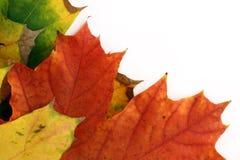 Frontera aislada de las hojas de otoño Imagen de archivo
