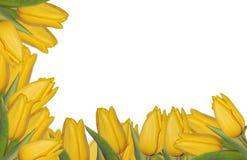 Frontera amarilla de los tulipanes Fotografía de archivo