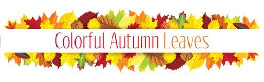 Frontera colorida de las hojas de otoño Imagen de archivo libre de regalías