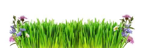Frontera con la hierba verde fresca y las flores salvajes Imágenes de archivo libres de regalías