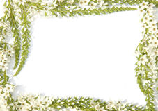 Frontera con las flores Imagenes de archivo